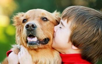 Правильный уход за собакой