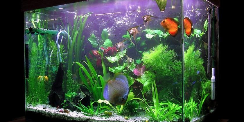 аквариум выбор