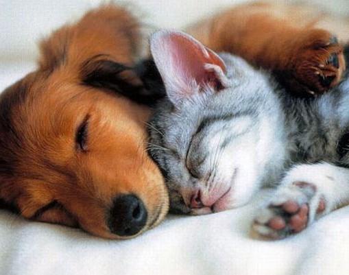 Что лучше кошка или собака