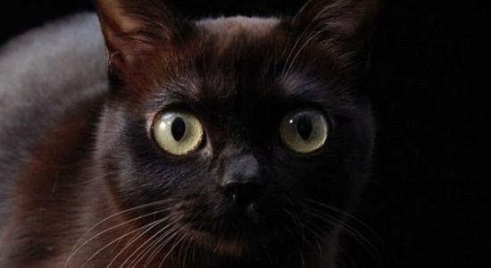 Кошачья магия