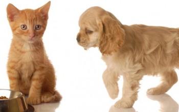 Кошка и собака — что лучше