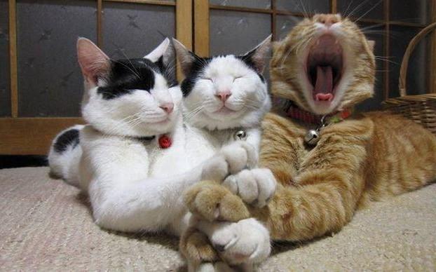 правила по уходу за кошками
