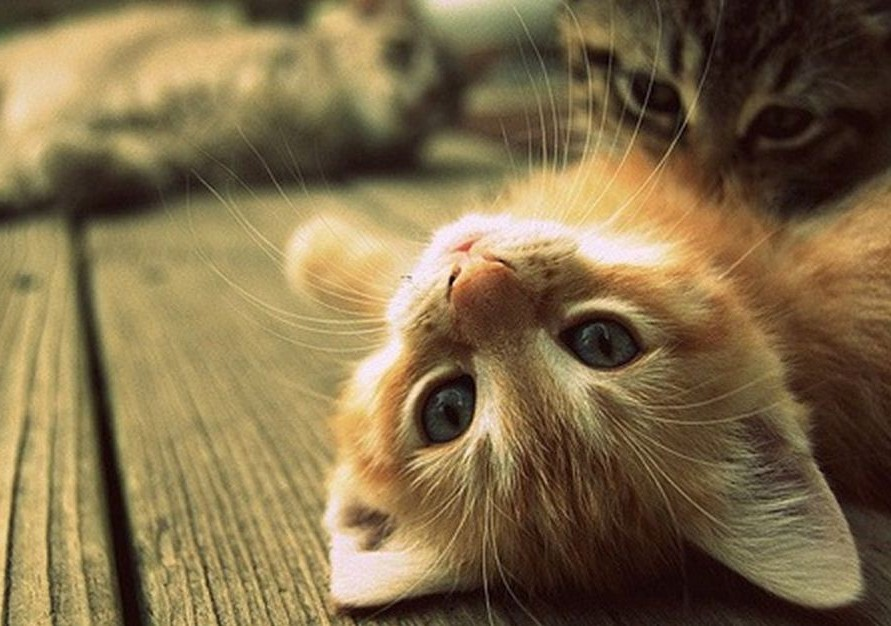 выбор котёнка
