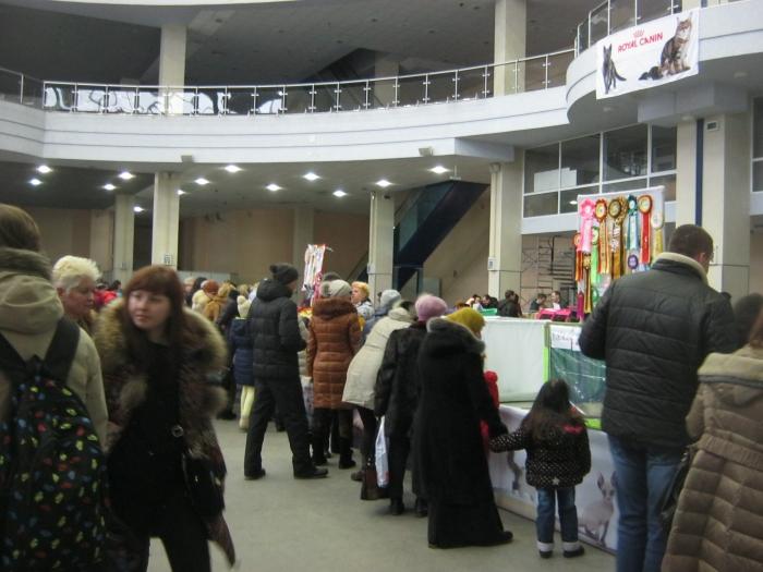 выставка кошек в Харькове