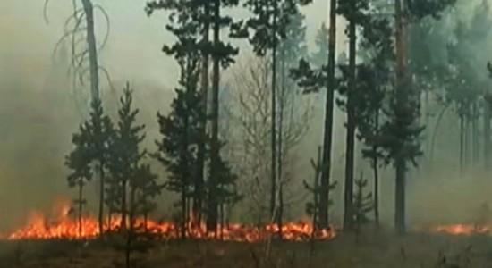 пожары в России сегодня